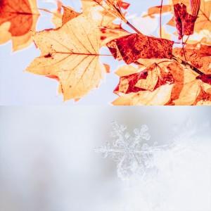 秋は乾燥の始まり。秋冬のお肌保湿対策